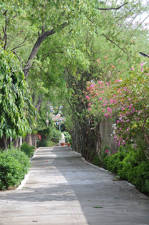 Our long driveway edged by greenery