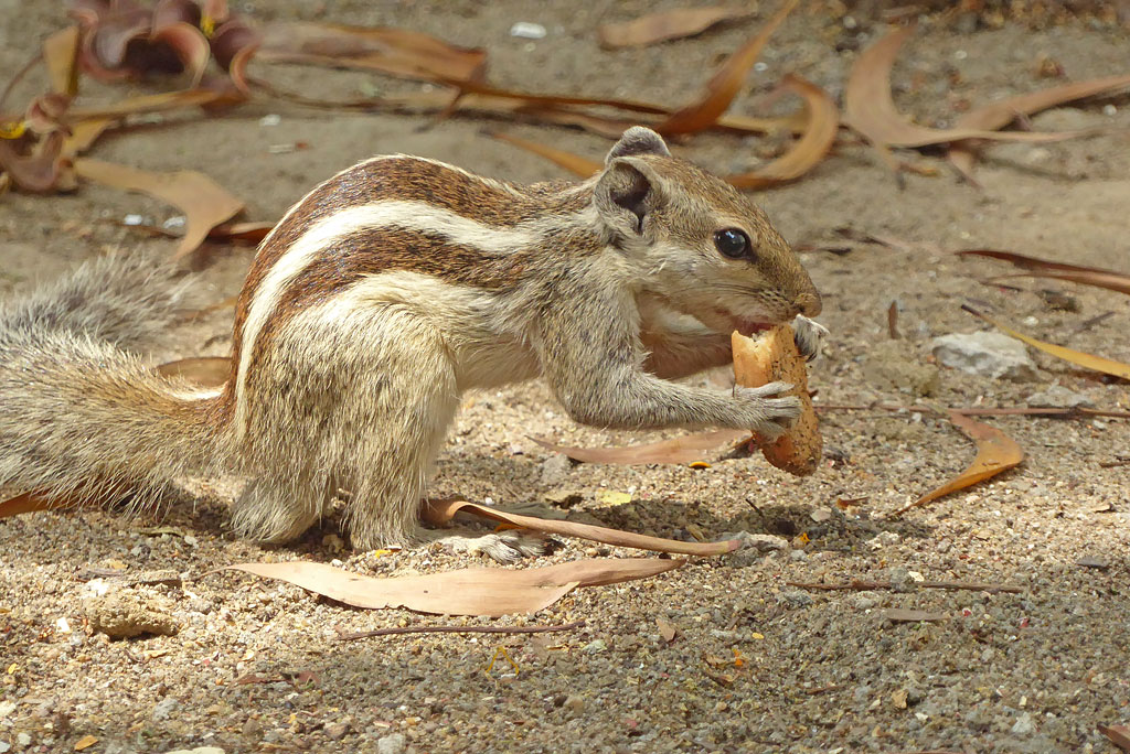 Cheeky squirrels running around the garden are an entertaining presence