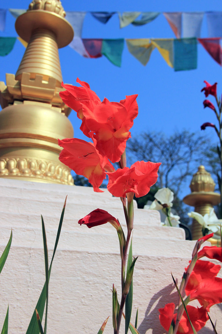 Flowers in the gardens are a constant offering to our stupas